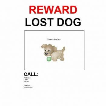 Lost Dog Flyer Template 01