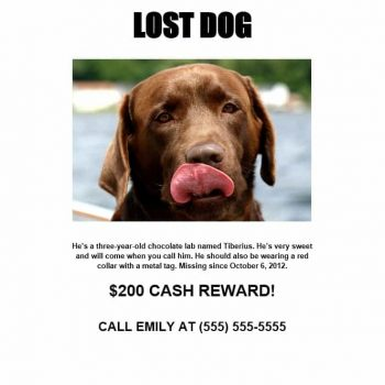 Lost Dog Flyer Template 03