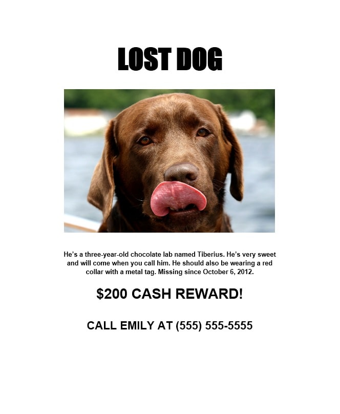 Lost Dog Flyer Template 03  Lost Pet Template