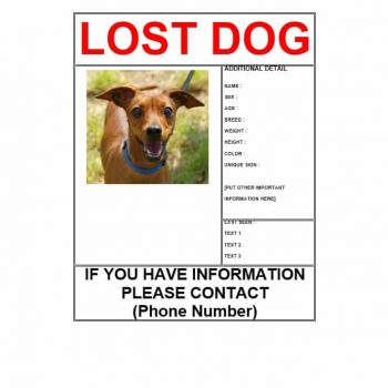 Lost Dog Flyer Template 05