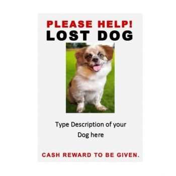 how to make lost dog flyers