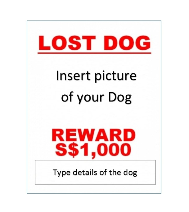 Lost Dog Flyer Template 09