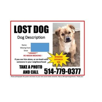 Lost Dog Flyer Template 13