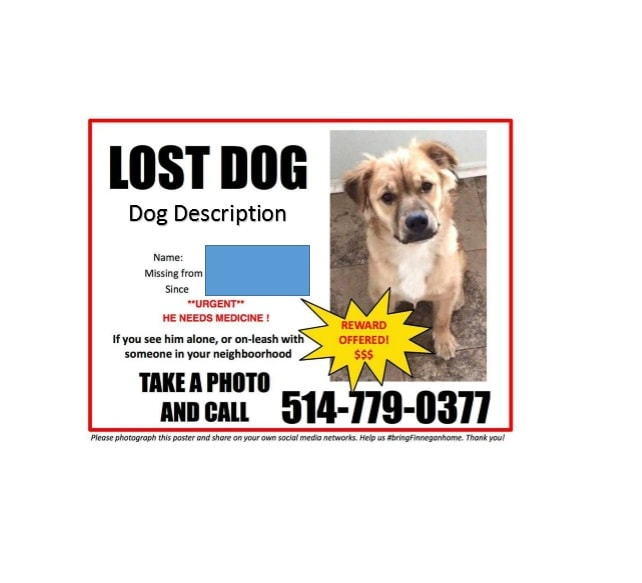 Lost Dog Flyer Template 13  Lost Pet Flyer Maker