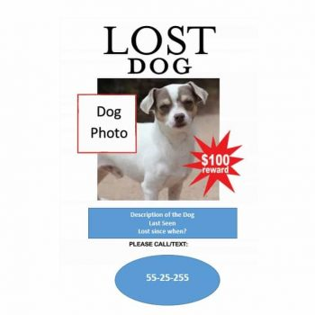 Lost Dog Flyer Template 14