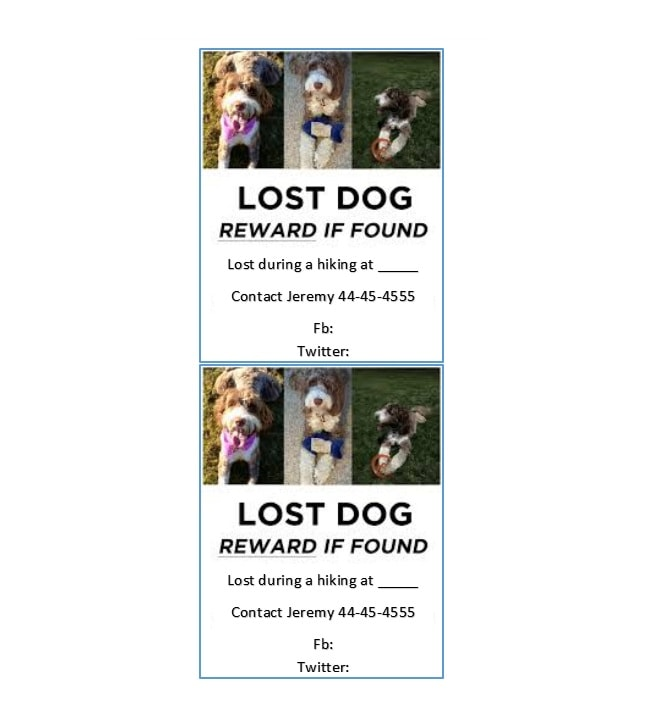 Lost Dog Flyer Template 17