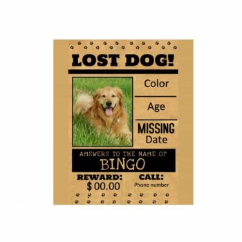 Lost Dog Flyer Template 18