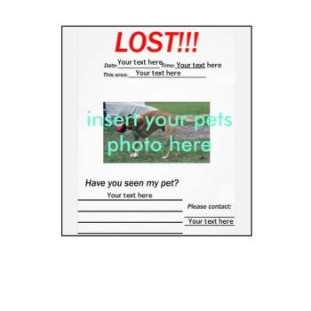 Lost Dog Flyer Template 20