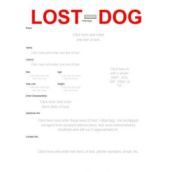 Lost Dog Flyer Template 28