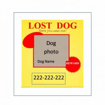 Lost Dog Flyer Template 33