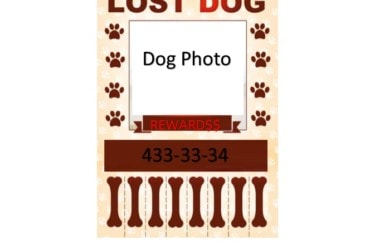 Lost Dog Flyer Template 35