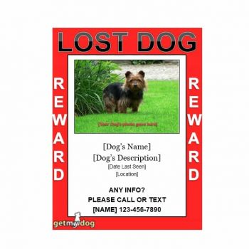 Lost Dog Flyer Template 40